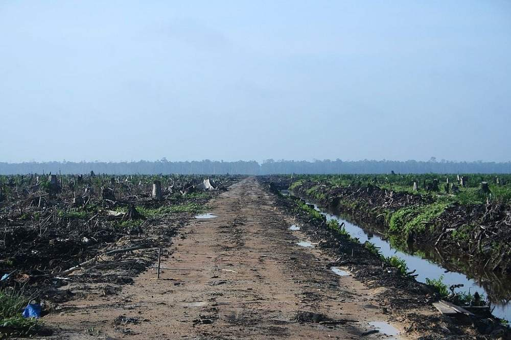Riau_palm_oil_2007