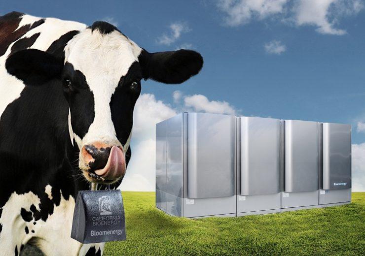 Cow_Photo
