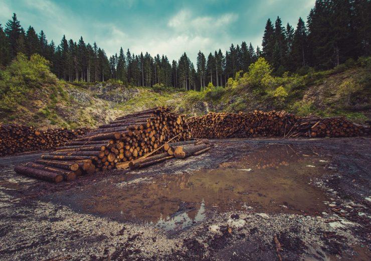 deforestation logging