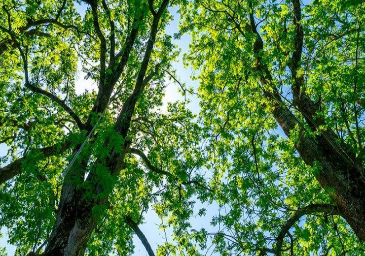 bcar_ash_trees